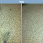 mold carpet disaster
