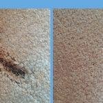 Carpet Cleaning Testimonials