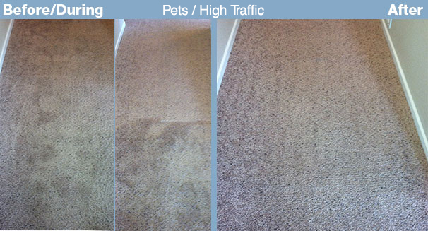 Pets And High Traffic Carpet Disaster