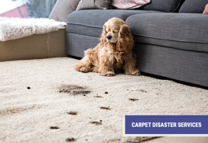 professional carpet disater services provided by Advanced Carpet Restoration